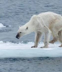 La Imagen que causa Indignación en el Mundo: refleja las graves consecuencias del Calentamiento Global