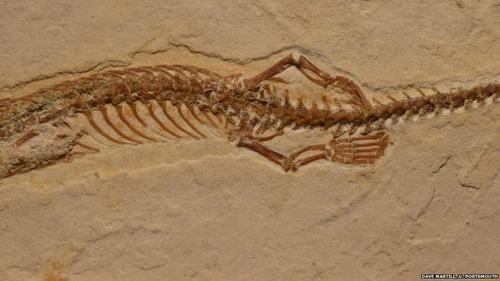 Parte posterior de la serpiente muestra dos pequeñas patas