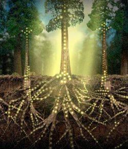 La Web de los Bosques… ¡Asombroso diseño del Eterno!